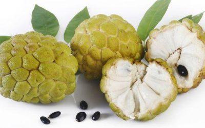 Sharifa – Dietary benefits of the fruit of the season